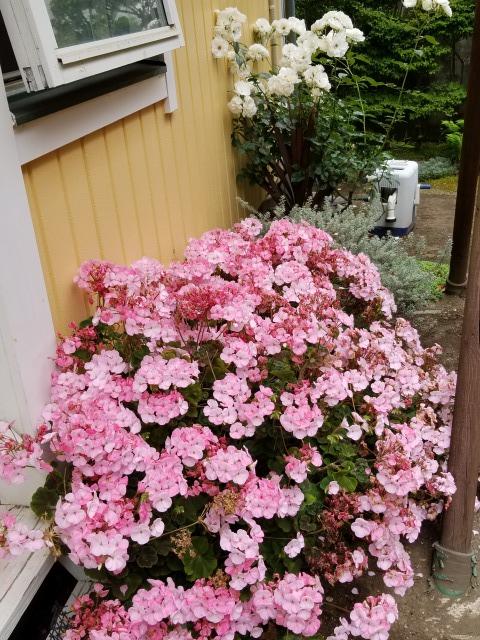 f:id:yukiusagi-home:20200601233921j:plain
