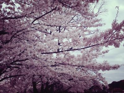 f:id:yukix03:20150404150136j:image