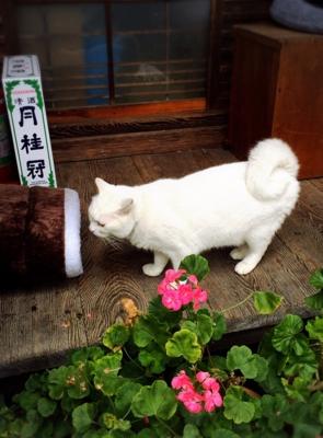 f:id:yukix03:20170122201527j:image