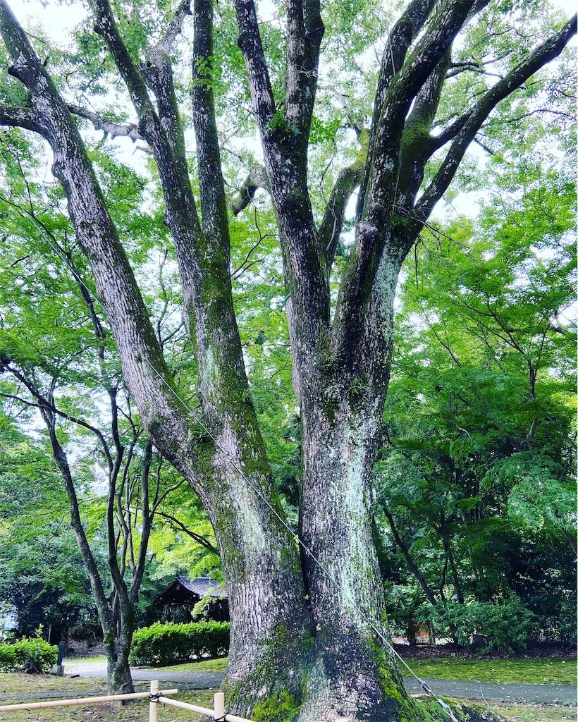 f:id:yukix03:20200728153747j:image
