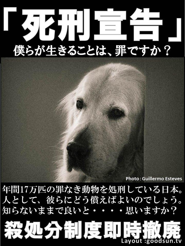 f:id:yukiyamakun:20180917130735j:plain