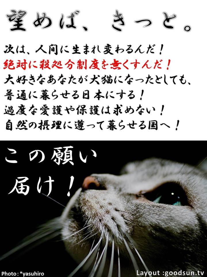 f:id:yukiyamakun:20180917130814j:plain
