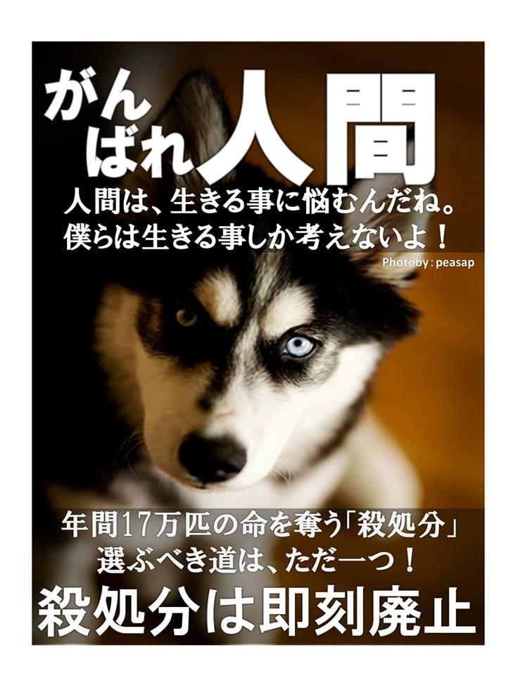 f:id:yukiyamakun:20180917140010j:plain