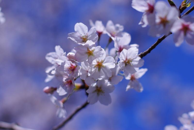 f:id:yukkohan:20120408091940j:image:w640