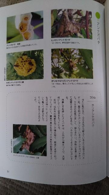 f:id:yukkurimushi:20180703090836j:image