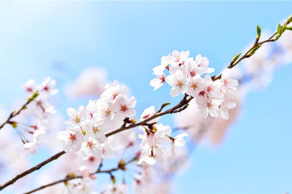 f:id:yuko-k-ami:20190326002220j:image