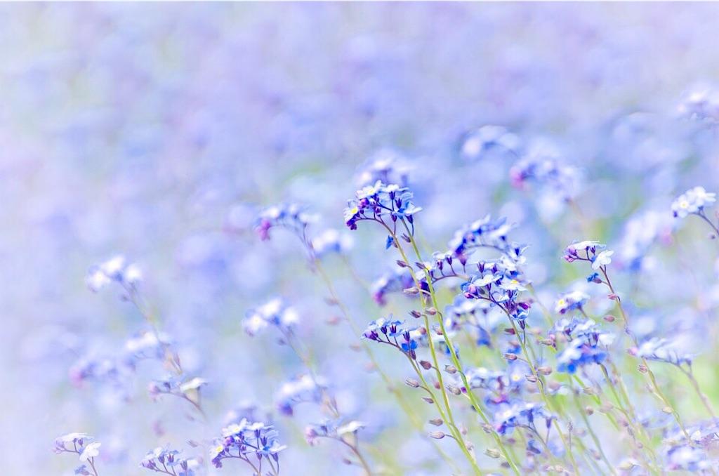 f:id:yuko-k-ami:20190607002050j:image