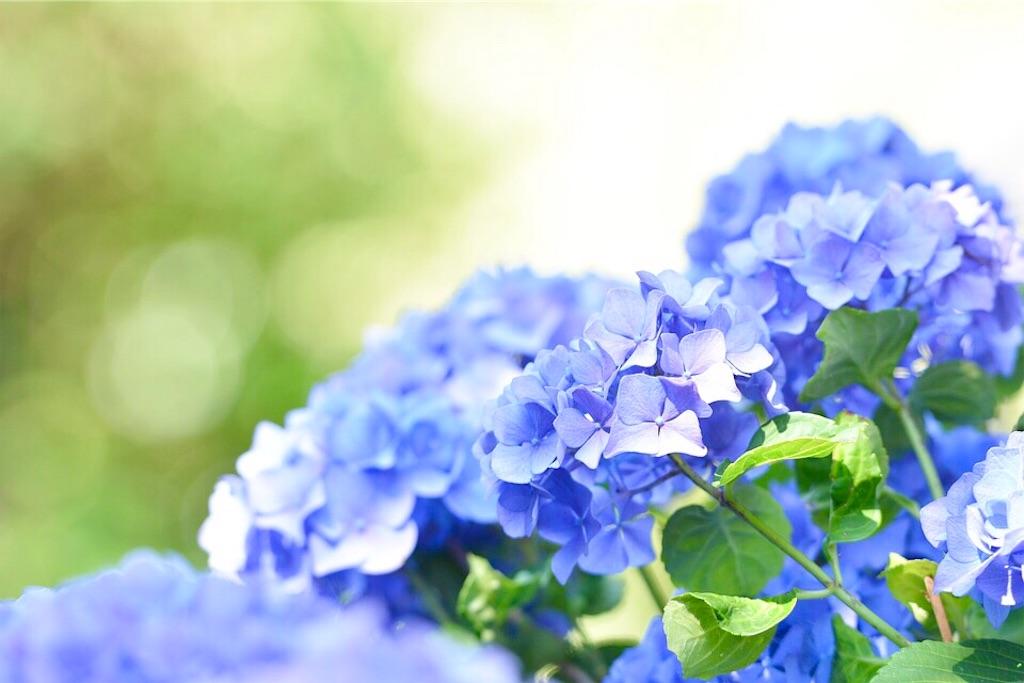 f:id:yuko-k-ami:20190710001353j:image