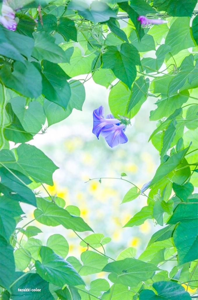 f:id:yuko-k-ami:20190829234420j:image