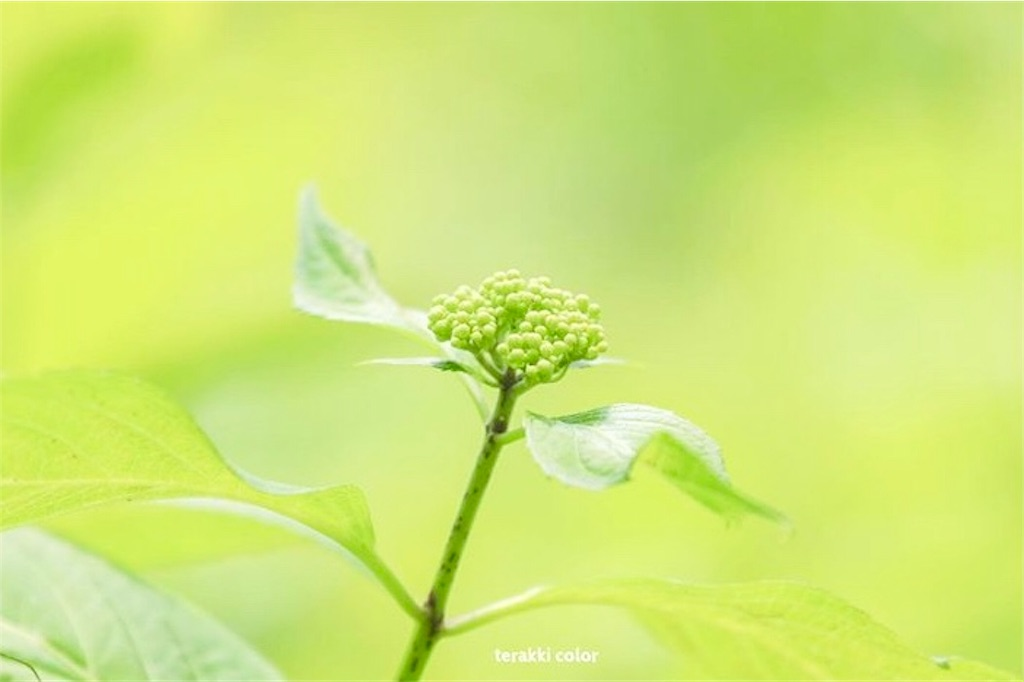 f:id:yuko-k-ami:20190830233928j:image