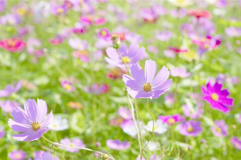 f:id:yuko-k-ami:20190901000217j:image