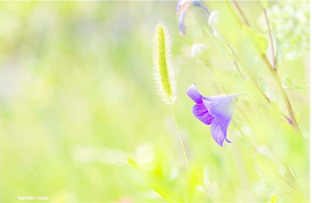 f:id:yuko-k-ami:20190915181019j:image