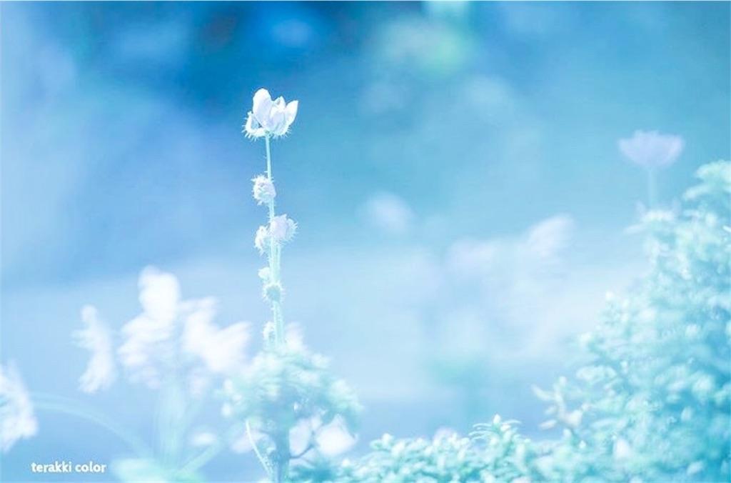 f:id:yuko-k-ami:20190927001237j:image