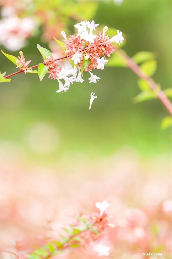 f:id:yuko-k-ami:20190927235618j:image