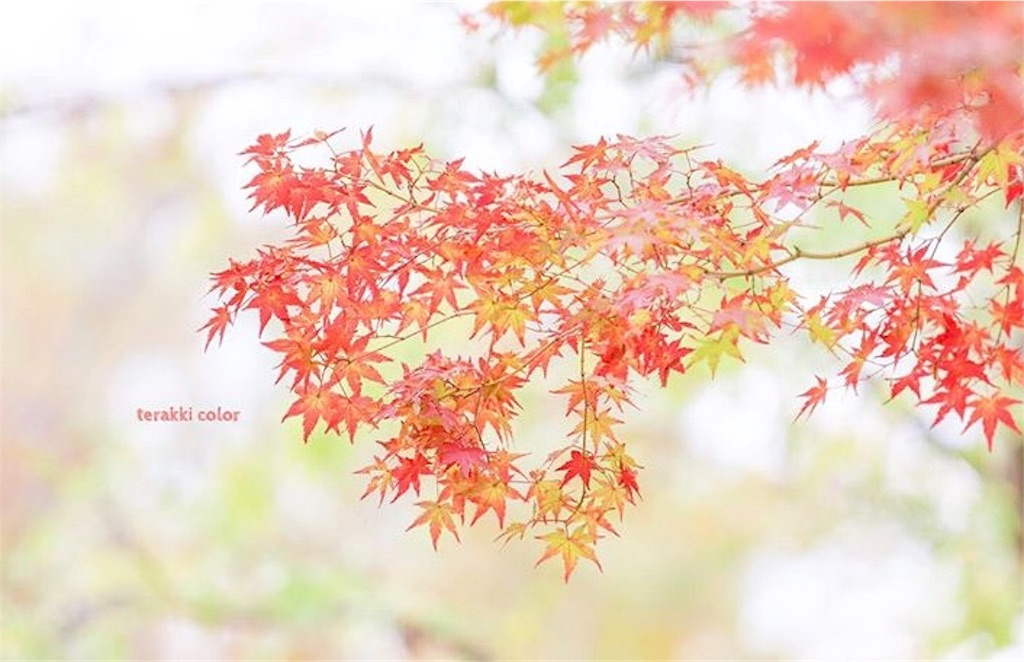 f:id:yuko-k-ami:20190929204735j:image