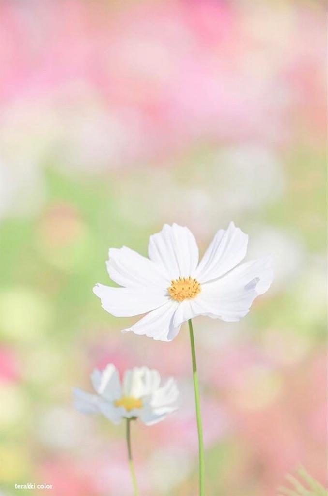 f:id:yuko-k-ami:20190929233819j:image