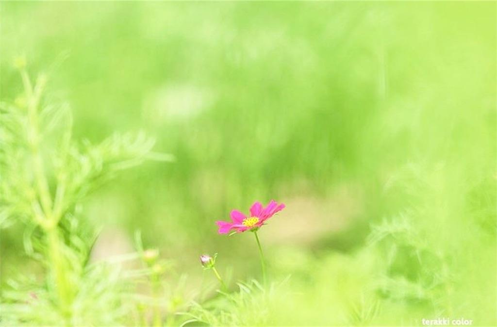 f:id:yuko-k-ami:20191007233437j:image