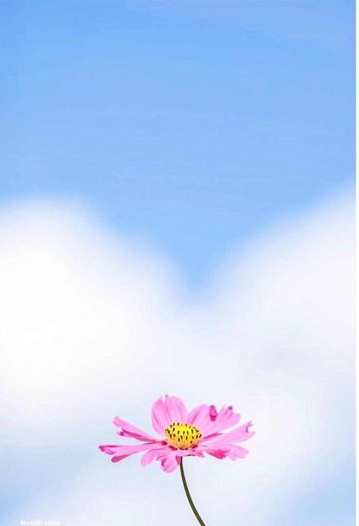 f:id:yuko-k-ami:20191009000722j:image