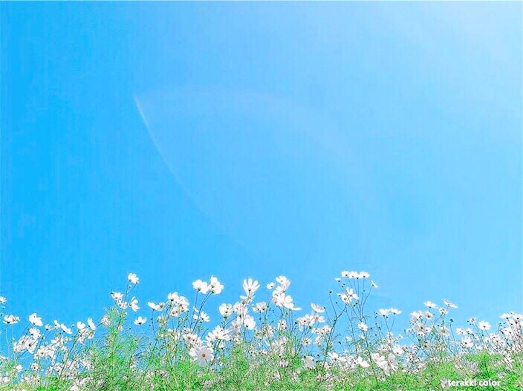 f:id:yuko-k-ami:20191011235226j:image