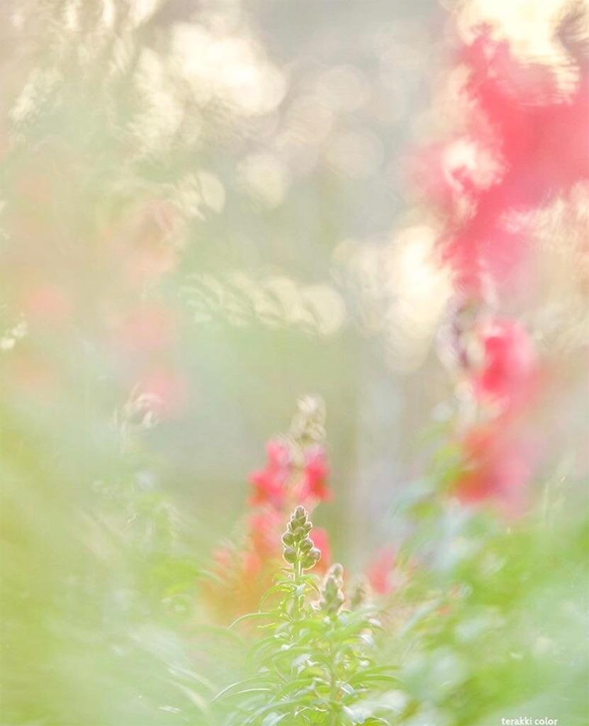 f:id:yuko-k-ami:20200109193113j:image