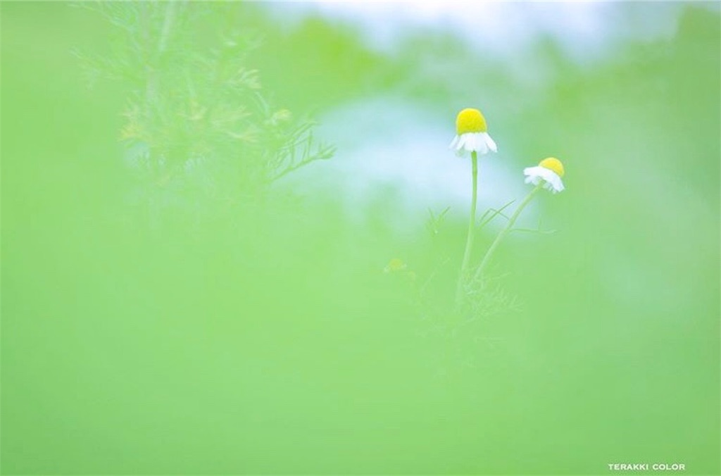 f:id:yuko-k-ami:20200114235017j:image