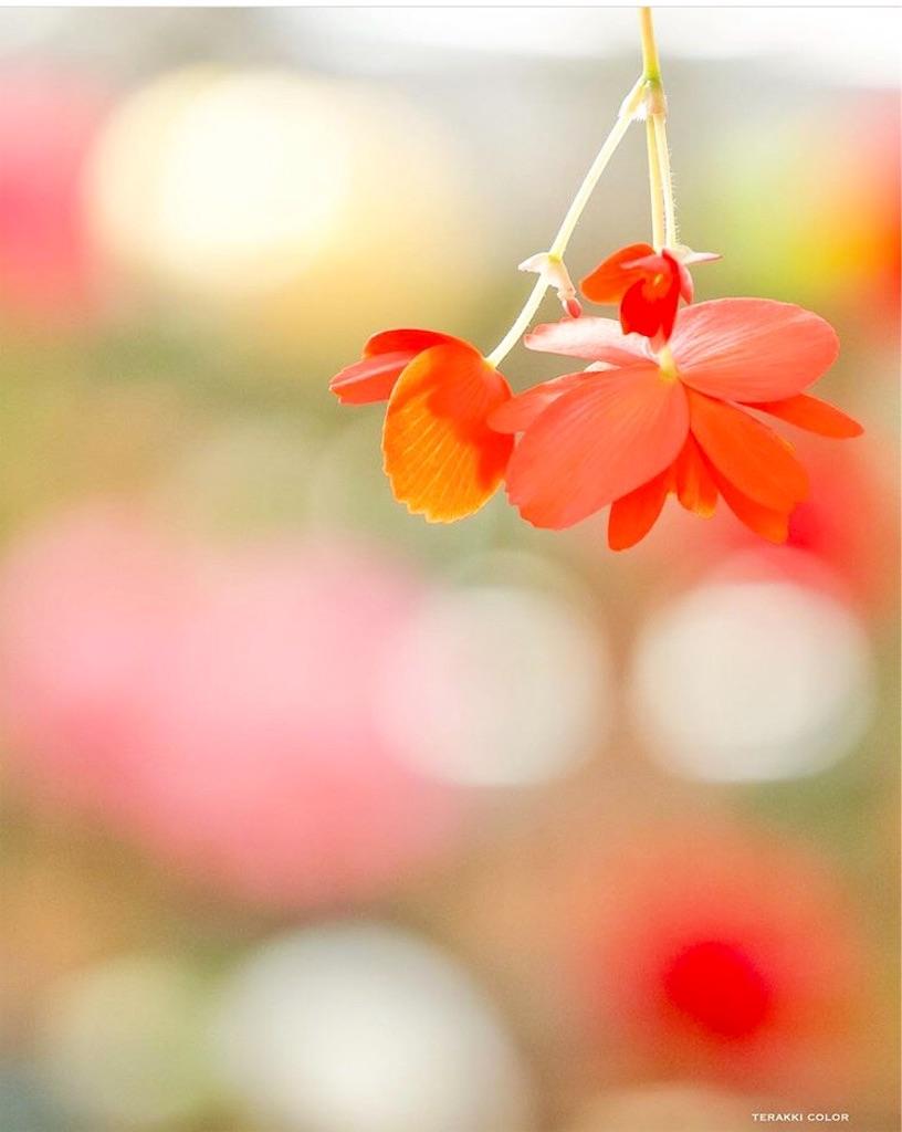 f:id:yuko-k-ami:20200115231259j:image