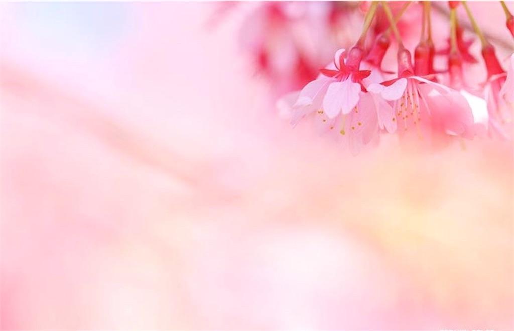 f:id:yuko-k-ami:20200314224709j:image