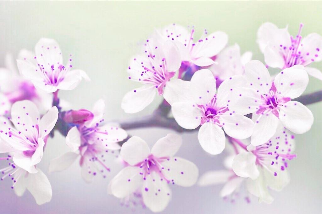 f:id:yuko-k-ami:20200315235034j:image