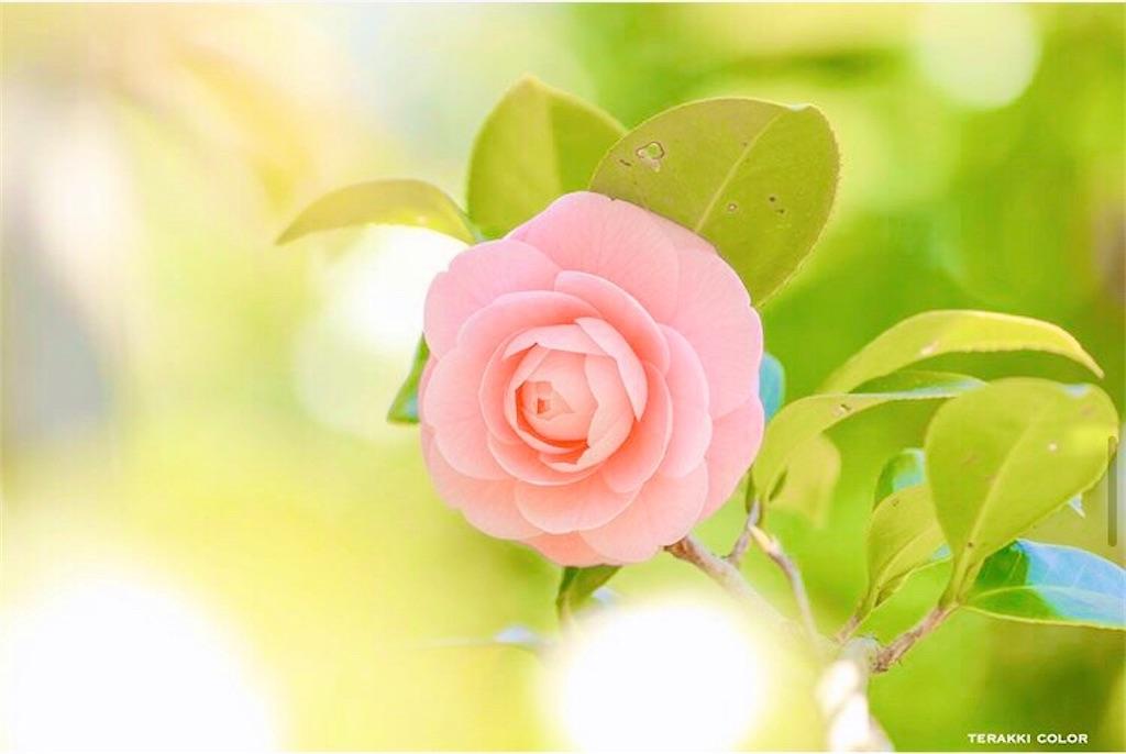 f:id:yuko-k-ami:20200326211619j:image