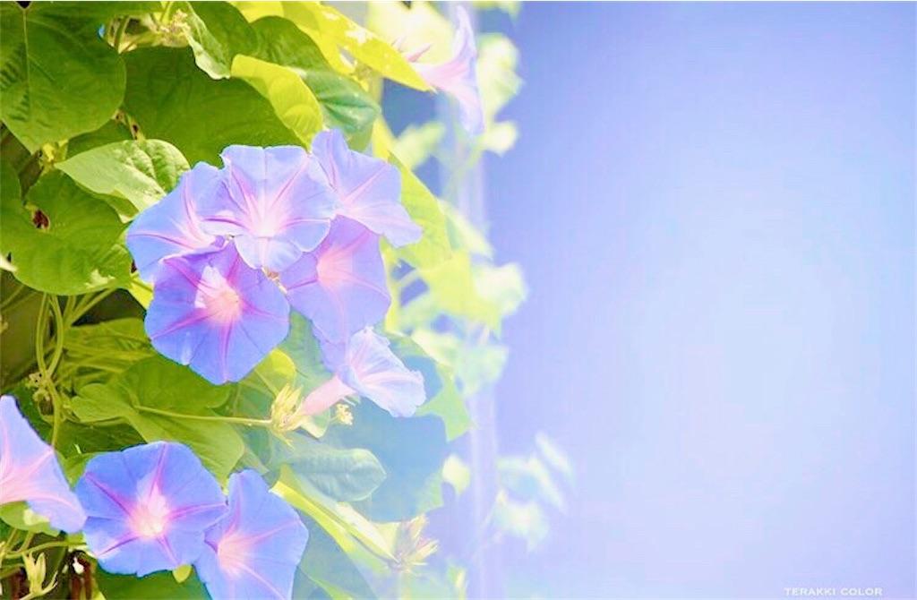 f:id:yuko-k-ami:20200526000720j:image