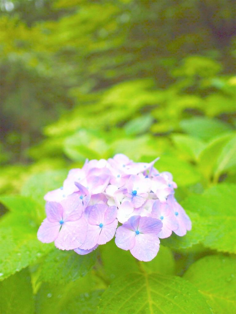 f:id:yuko-k-ami:20200610221654j:image