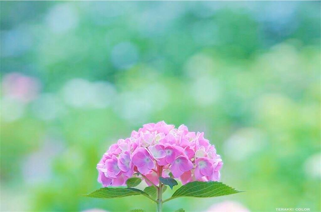 f:id:yuko-k-ami:20200708210651j:image