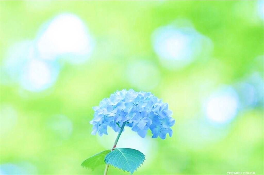 f:id:yuko-k-ami:20200715215609j:image
