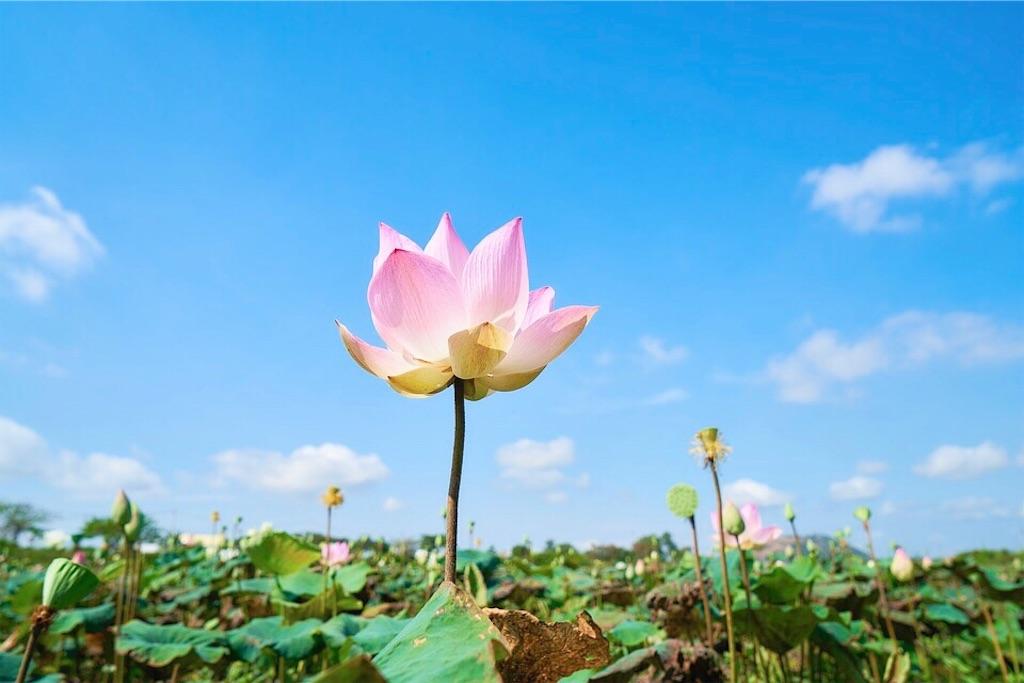 f:id:yuko-k-ami:20201125231202j:image