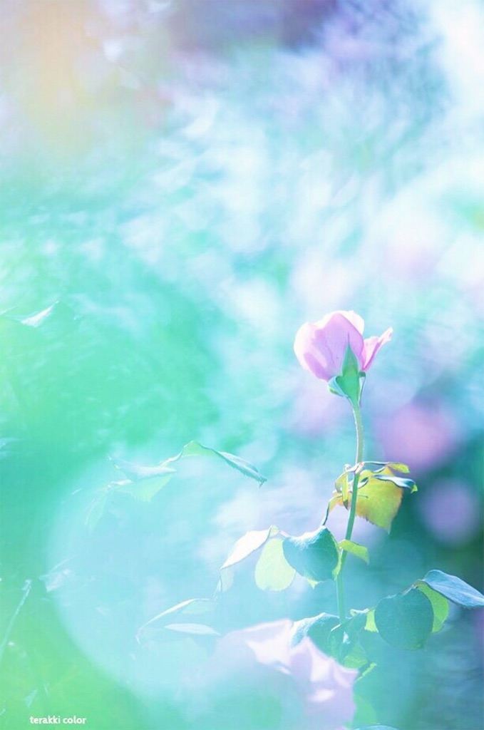 f:id:yuko-k-ami:20201228195330j:image
