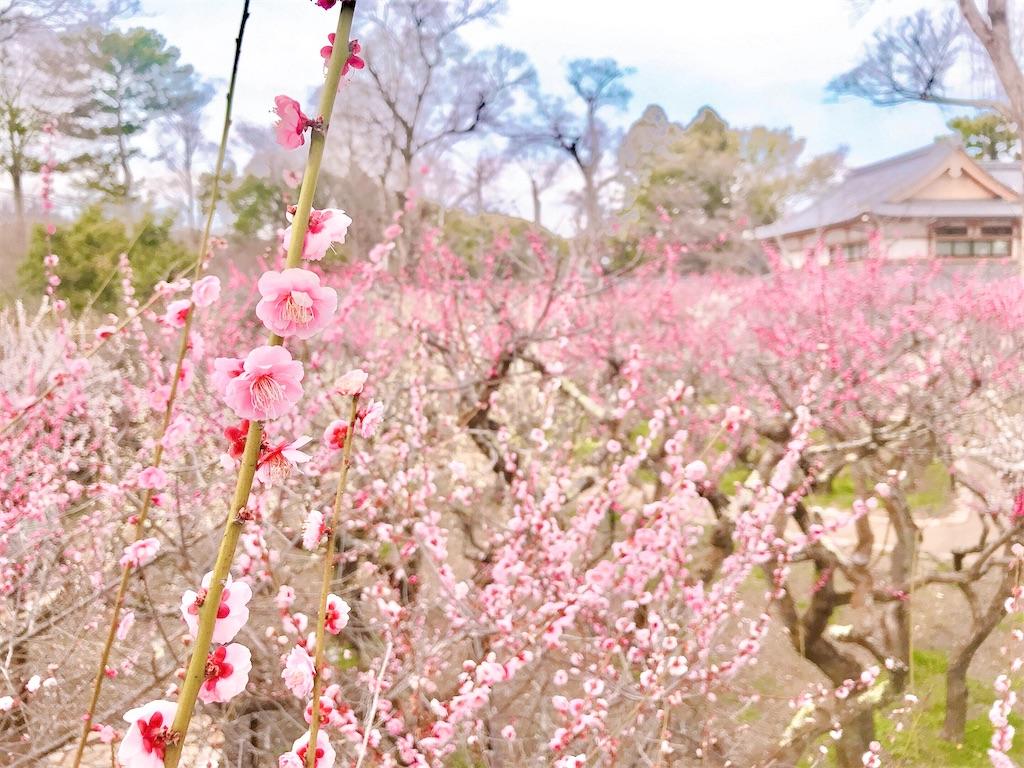 f:id:yuko-k-ami:20210309221935j:image