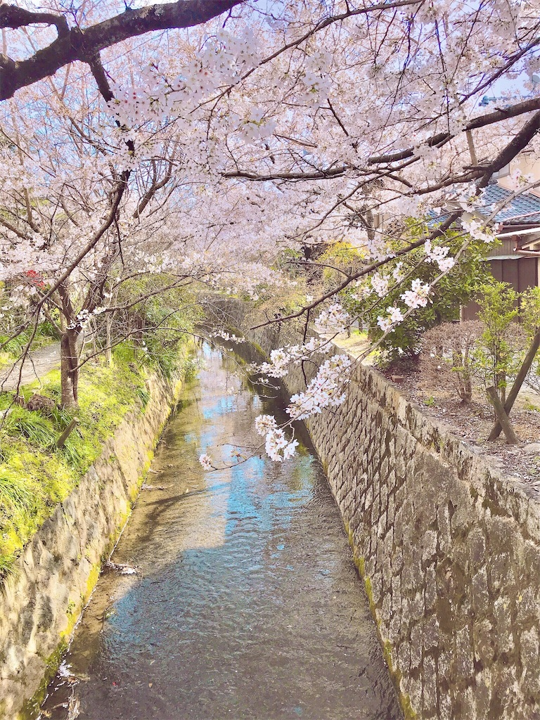 f:id:yuko-k-ami:20210326194506j:image