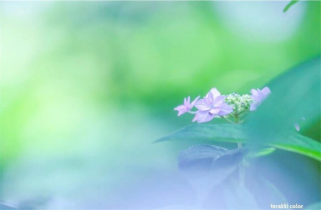 京都暮らし 自由に生きる