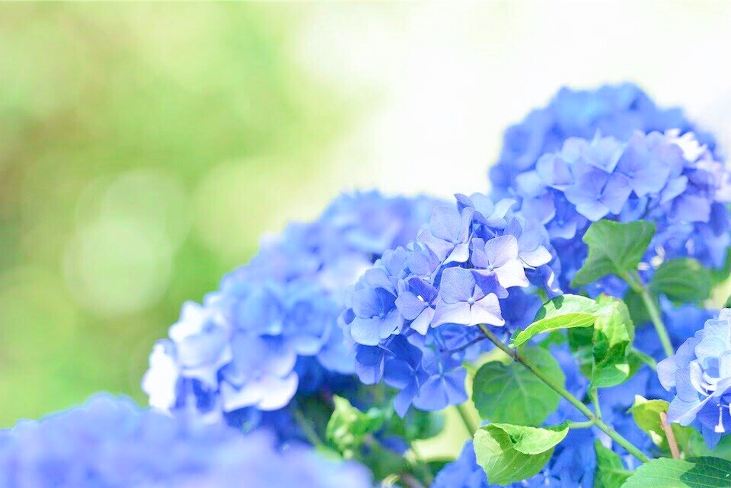 f:id:yuko-k-ami:20210701170201j:image
