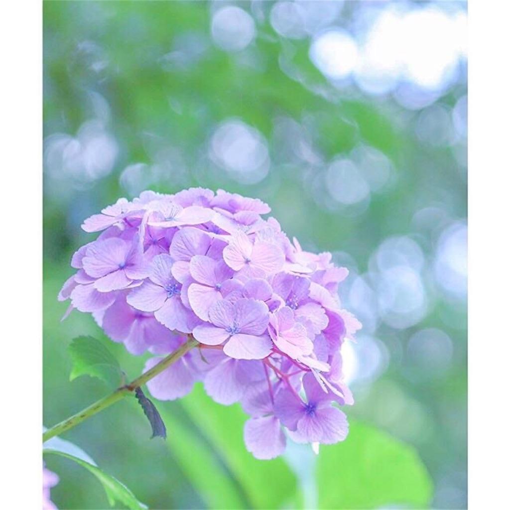 f:id:yuko-k-ami:20210723192358j:image
