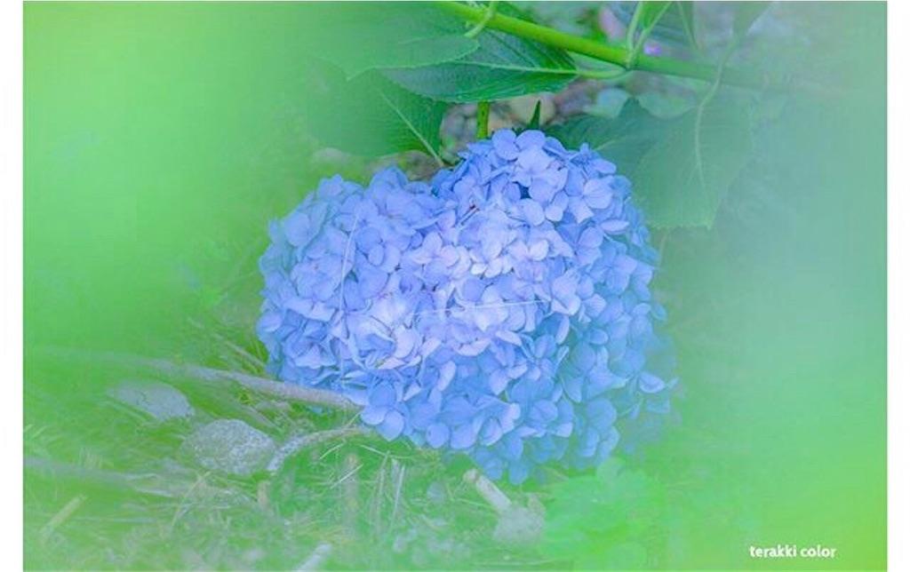 f:id:yuko-k-ami:20210723200646j:image