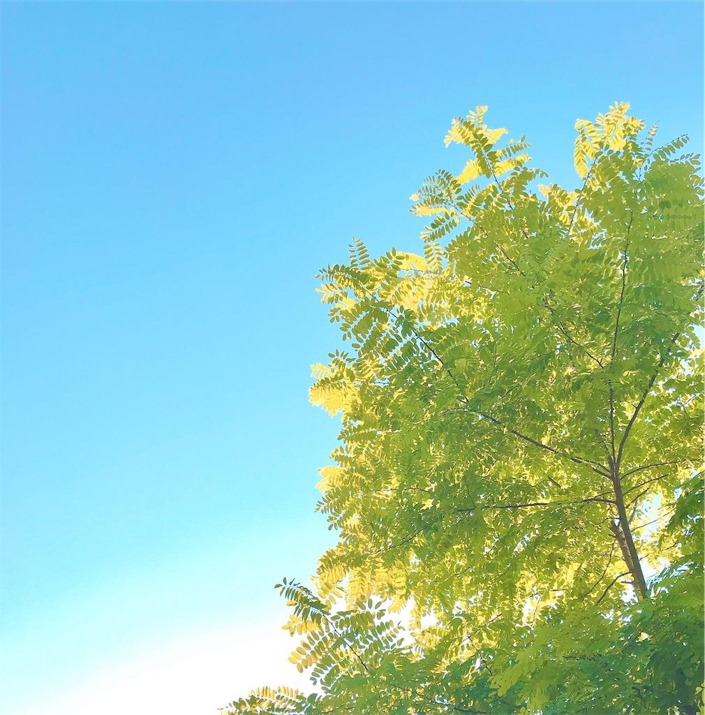 f:id:yuko-k-ami:20210922193539j:image