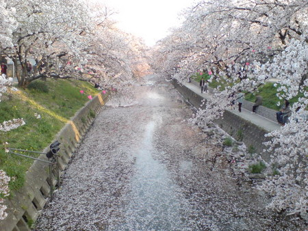 f:id:yuko1658:20080406171850j:image