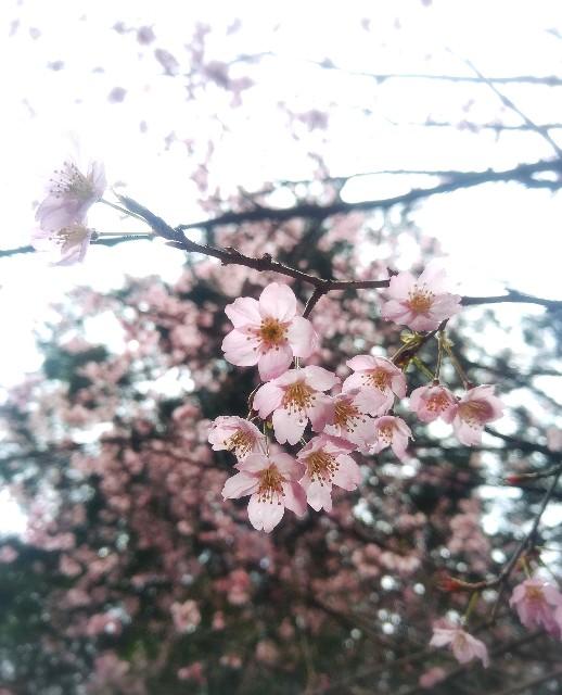 f:id:yuko76a:20170326222623j:image