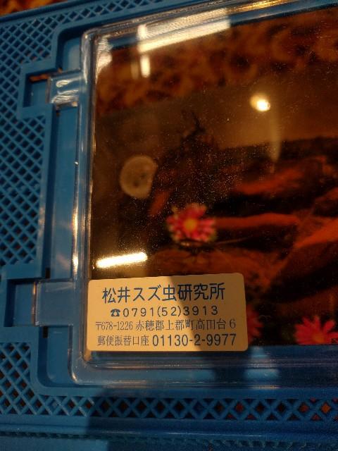 f:id:yuko76a:20170630035236j:image