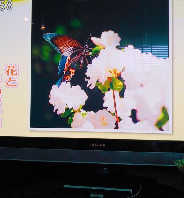 f:id:yuko76a:20180425155342j:image