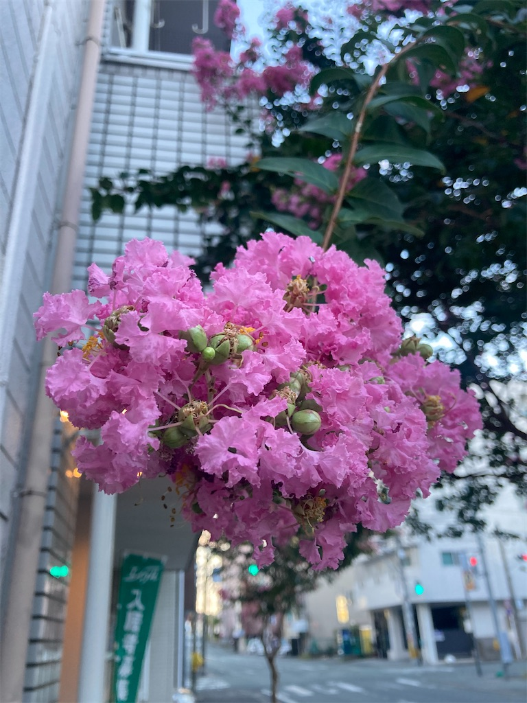 f:id:yuko76a:20200901112517j:image