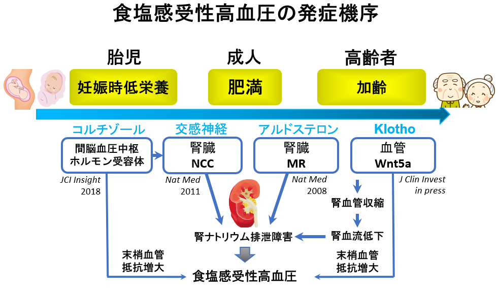 f:id:yukukawa-no-nagare:20200702130742p:plain