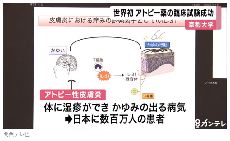 f:id:yukukawa-no-nagare:20200715071950p:plain