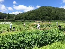 f:id:yukukawa-no-nagare:20210613083903j:plain